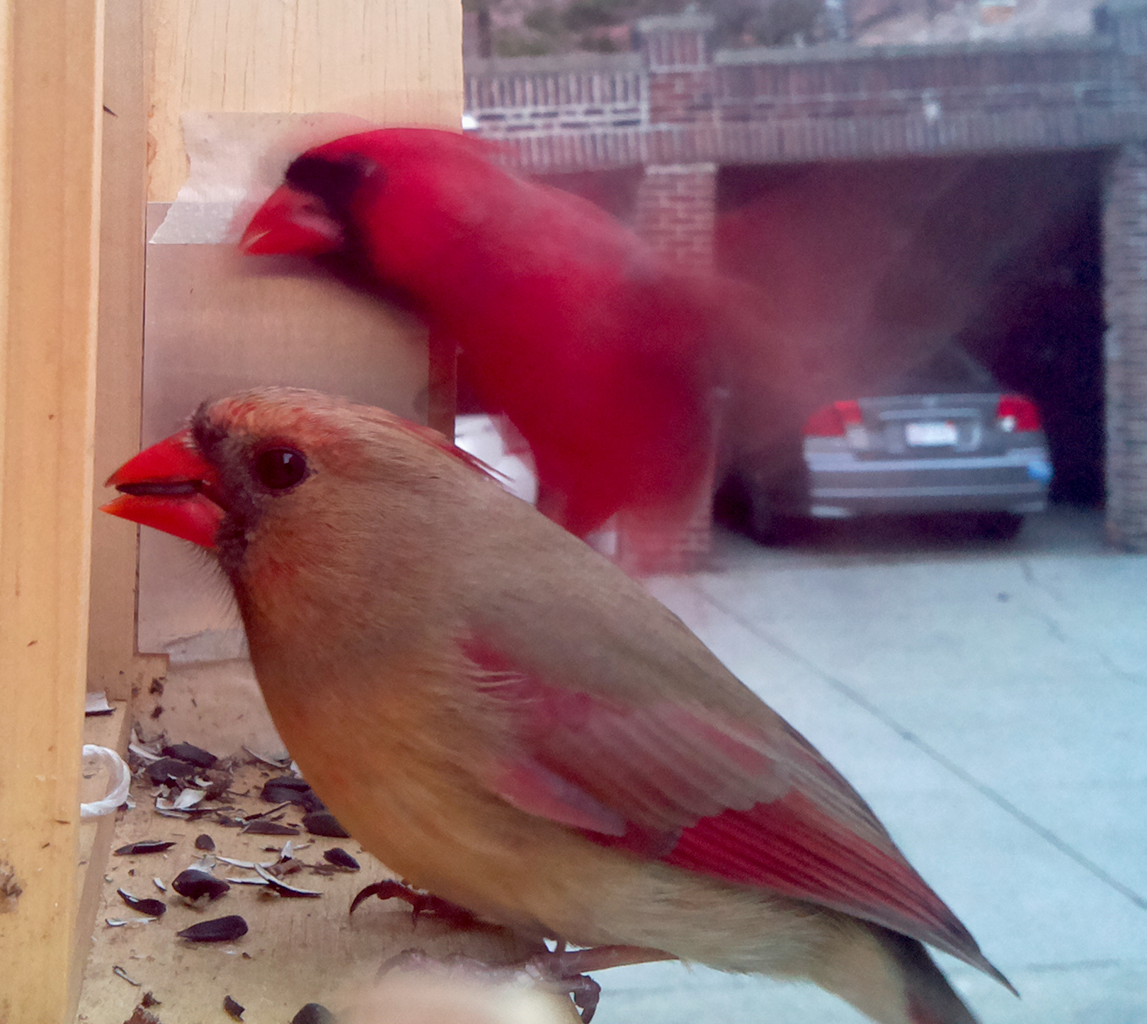 A pair of Cardinals.